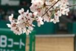 平成30年 甲府市ソフトテニス協会理事長杯争奪オープン大会